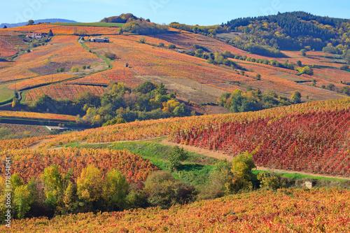 Aluminium Prints Autumn Le vignoble de Juliénas en automne,