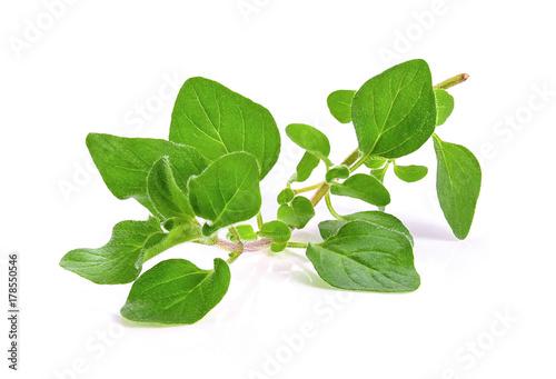 Fototapeta fresh oregano herb on white background obraz