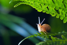 Close Up Photography Of Snail In Nature