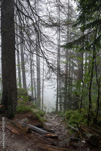 mokry-i-mglisty-poranek-na-szlaku-turystycznym-w-lesie