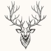 Head Of Deer
