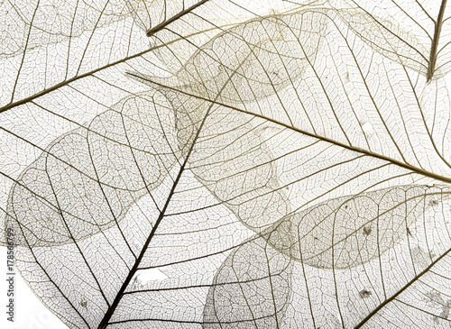 Foto auf Leinwand Texturen a leaf texture close up isolated on white