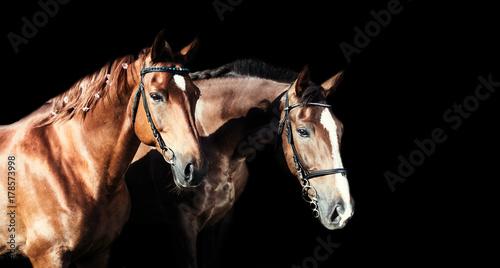 piekne-konie