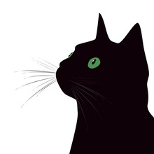 Black Cat With Green Eyes On W...