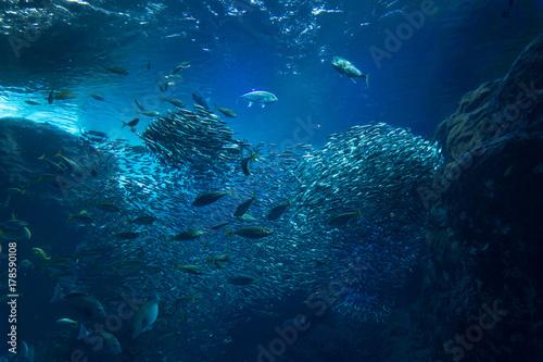 海底 イワシの群れ
