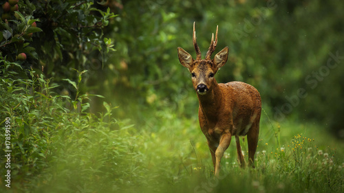 Photo sur Toile Cerf Wild atmosphere