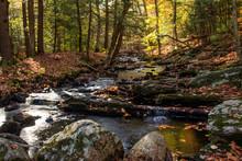 Autumn Brook
