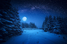 Majestic Winter Forest