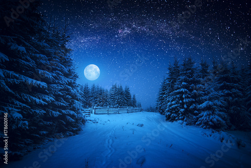 Foto op Canvas Nacht Majestic winter forest