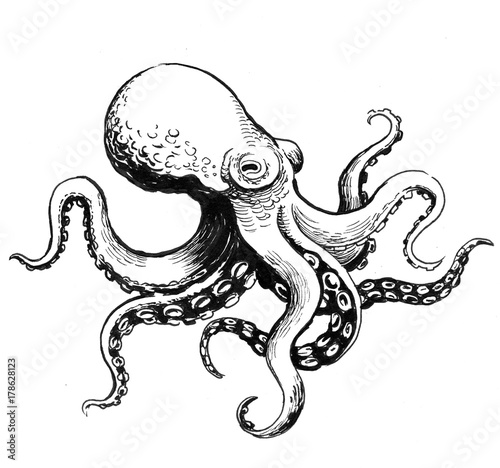Fotografie, Obraz  Octopus