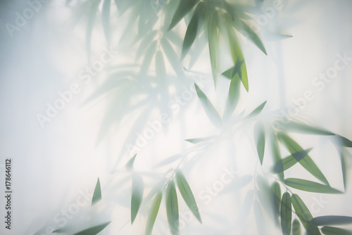 Poster Bamboe Green bamboo in the fog with stems and leaves behind frosted glass