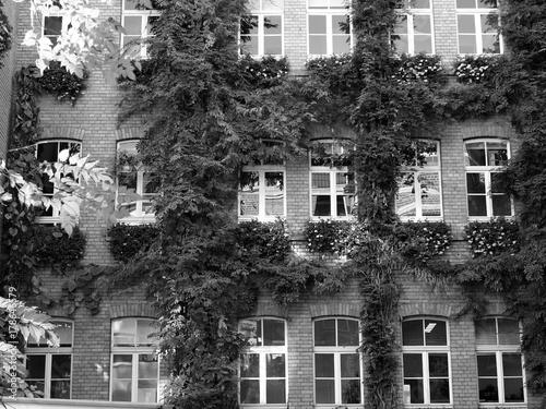 Begrunte Backsteinfassade Eines Schmucken Altbau In Einem