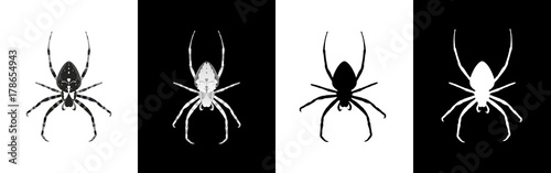 Tela Set of spider insect vector illustration