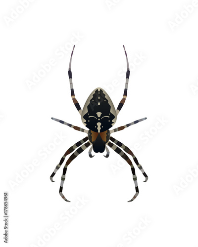 Photo Insect spider vector illustration