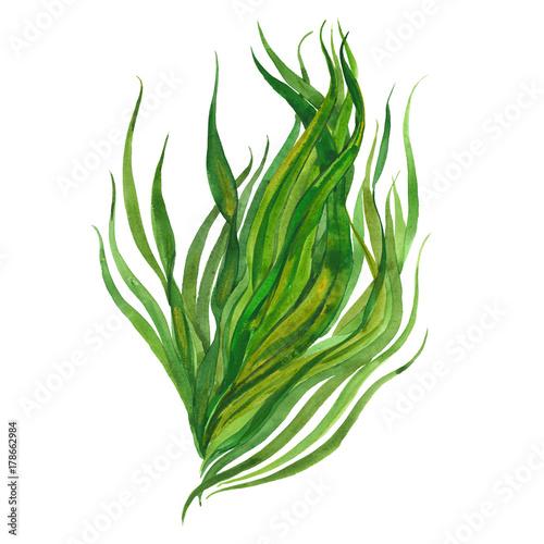 Fotografia watercolor image of seaweed