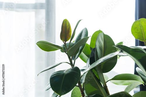 Poster Plant house plant