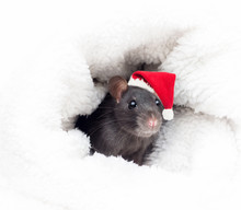 Rat In A New Year's Hat
