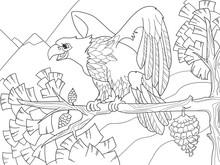 The Bird Of Prey Is An Eagle O...