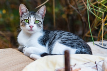 Close Up Of Stray Cat In The Peloponnese, Greece.