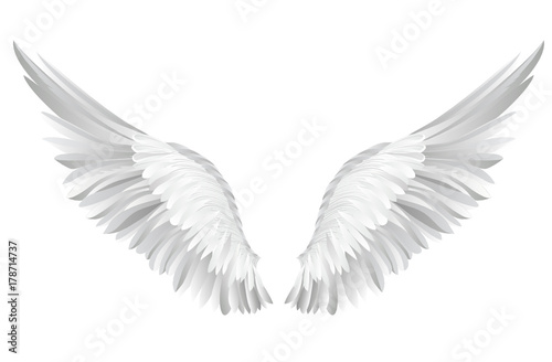 Poster Cygne Wings. Vector illustration on white background. Black and white