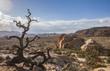 canvas print picture - Joshua Tree Nationalpark, Kalifornien, USA