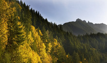 Fall Colors Stevens Pass Leave...