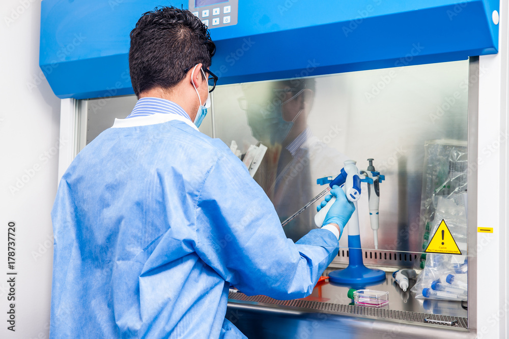 Fototapety, obrazy: Young scientist working in a safety laminar air flow cabinet at laboratory