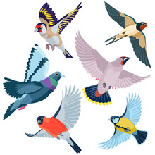Six Flying Birds / There Are Goldfinch, Swallow, Waxwing, Pigeon, Bullfinch And Titmouse