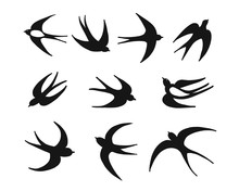 Swallows, Sketch For Your Design