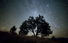 Lone Western Juniper Tree And ...