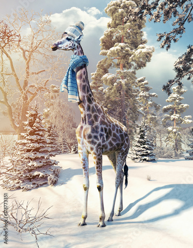 giraffe in the winter forest