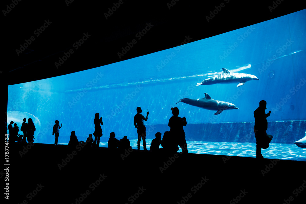 People watching dolphins in blue aquarium