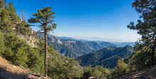 Tall Pine Clings To The Side O...