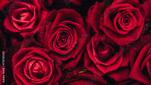 red-roses-background-close-up