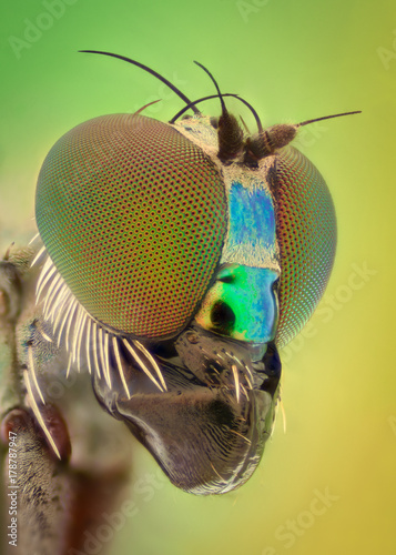 Extreme magnification - Long legged fly