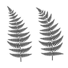 Fern Leaf Set