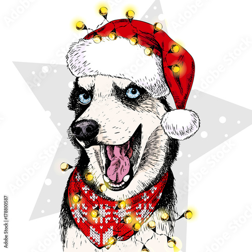 cd46fa8b2b3fc Vector portrait of Siberian Husky dog wearing santa hat Christmas lights  garland. Isolated on star and snow. Skecthed color illustraion.
