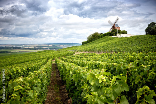 Foto op Aluminium Wijngaard Champagne. Vineyard and windmill Champagne Region near Vernezay France