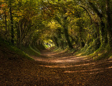 Tree Tunnel In Autumn / Fall Near Halnaker, Sussex