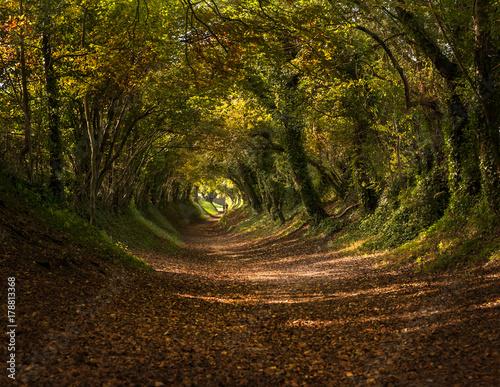 drzewny-tunel-w-jesieni-spadek-blisko-halnaker-sussex