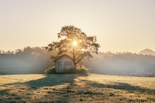 Abandoned Shack, Barn In The Field At Sunrise With Tree Next To It