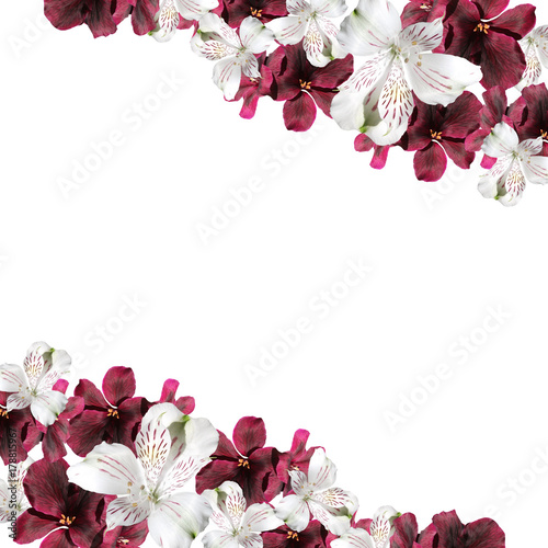 Beautiful floral background of pelargonium and alstroemeria