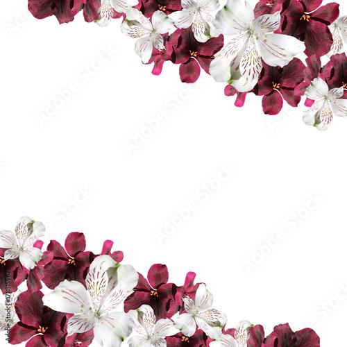 Beautiful floral background of pelargonium and alstroemeria