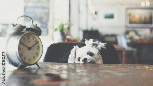 Leinwand Poster Sweet dog look something in coffee shop with clock