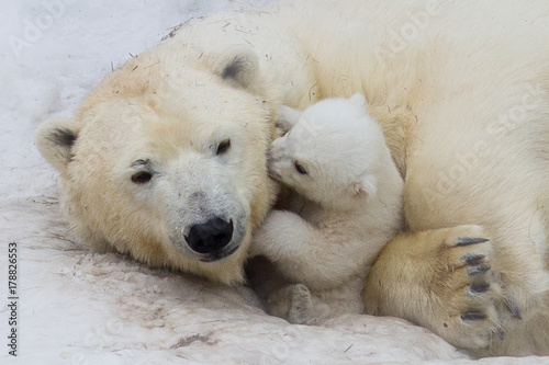 Deurstickers Ijsbeer Polar bear with cub