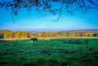 Herbstlandschaft mit Pferd