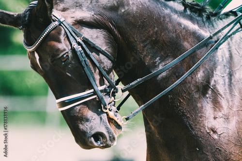 Deurstickers Paardensport Dressurpferd