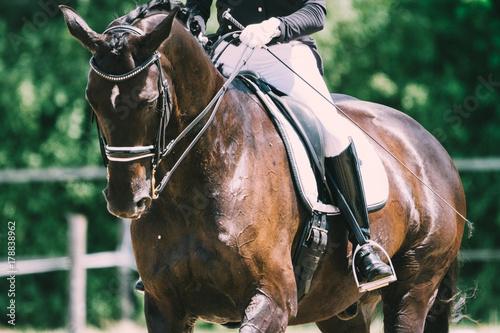 Spoed Foto op Canvas Paardrijden Dressurpferd