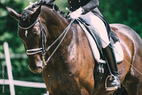 La pose en embrasure Equitation Dressurpferd