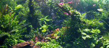 Beautiful Freshwater Green Aqu...